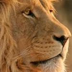 Mac OSX Lion