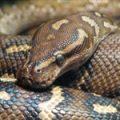Python 2.7 Tutorial Pt 4